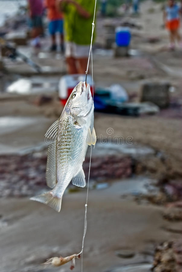 Een vis op haak stock afbeelding