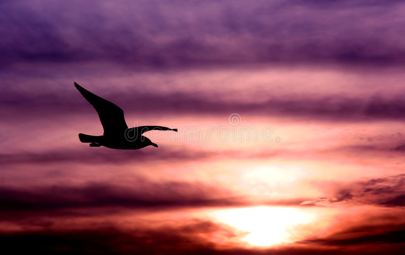 Een vleugel en een gebed stock afbeeldingen
