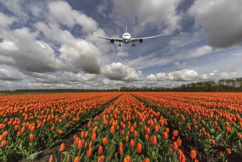 Een vliegtuig die op een oranje landbouwbedrijf van de tulpenbol vliegen stock foto's