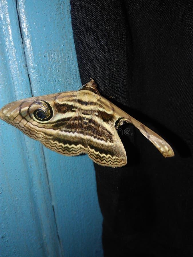 Een vlinder royalty-vrije stock afbeelding