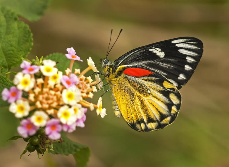 Een vlinder stock fotografie