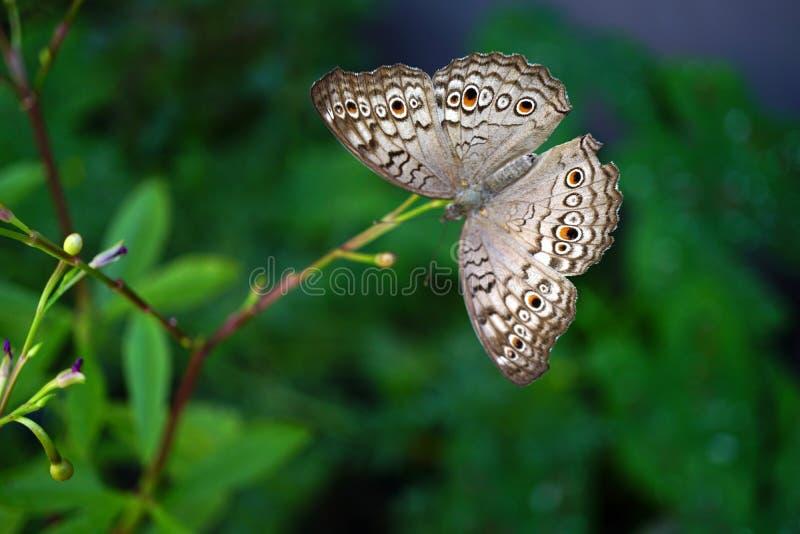 Een vlinder die op de boomtak hangen royalty-vrije stock afbeeldingen