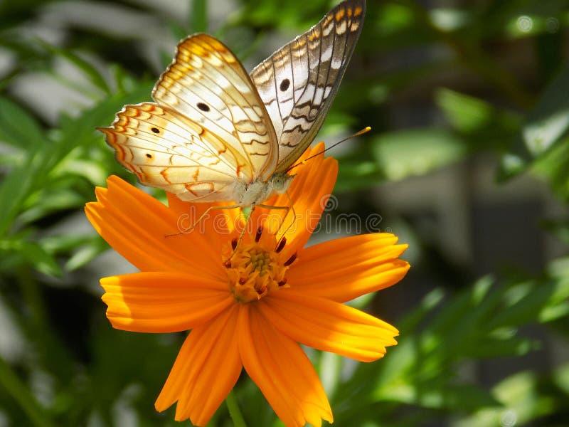 Een vlinder op een bloem stock fotografie