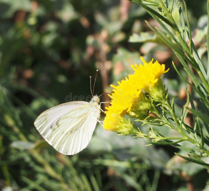 Een vlinder op een bloem royalty-vrije stock fotografie