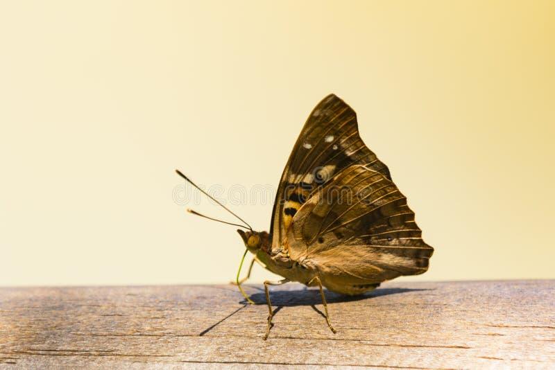 Een vlinder op een traliewerk royalty-vrije stock foto