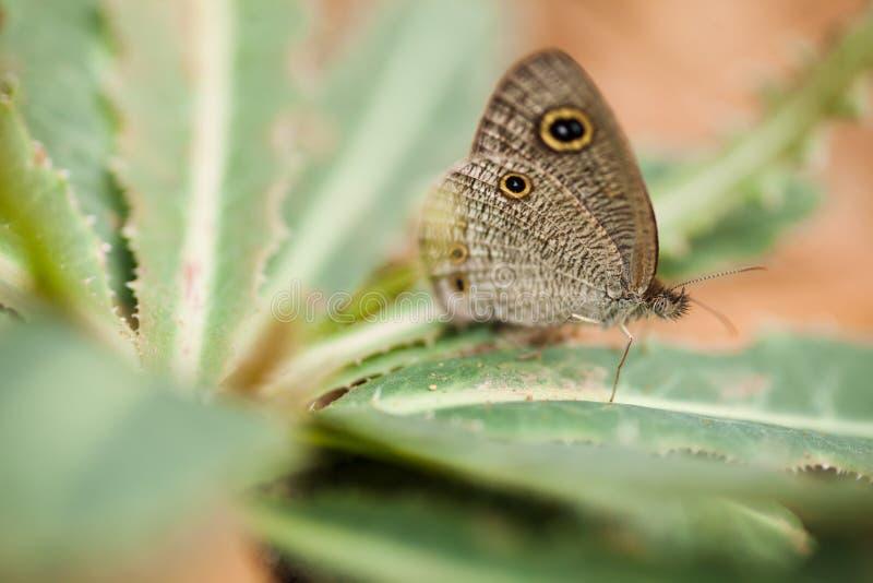 Een vlinder op gras stock foto's