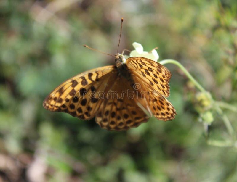 Een vlinder op een installatie stock afbeelding