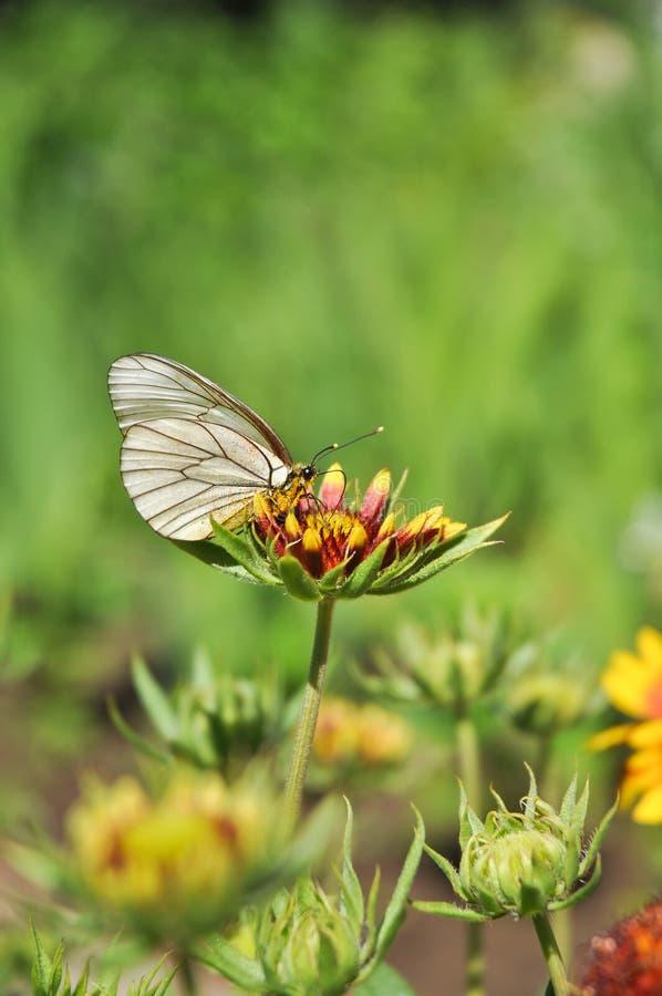 Een vlinder zit op een heldere bloem in duidelijk zonnig weer stock foto's