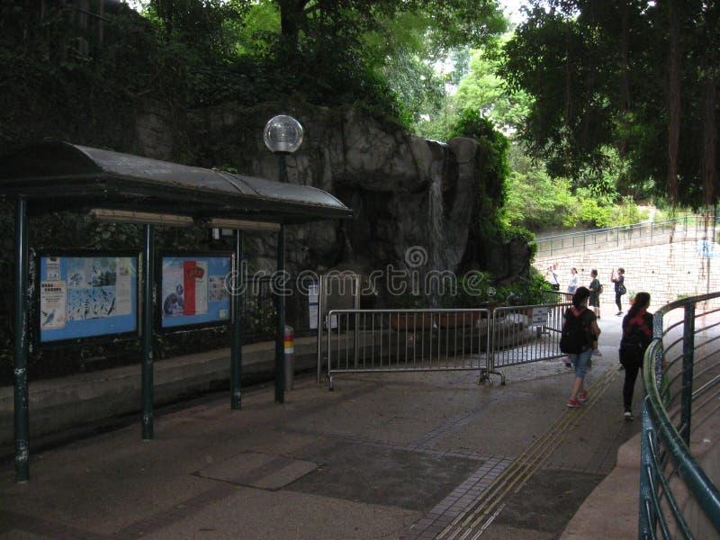 Een voetweg in het weelderige Kowloon-park, Hong Kong stock foto's
