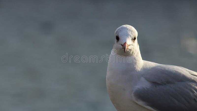 Een vogel stock fotografie
