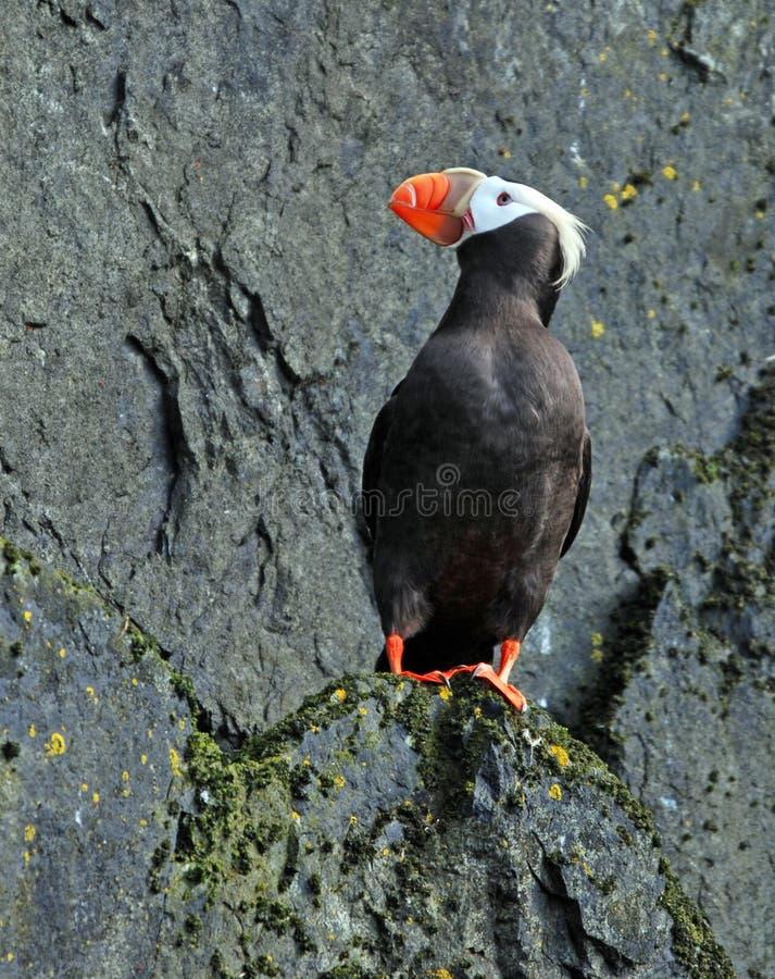Een vogel royalty-vrije stock foto's