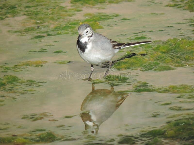 Een vogel stock afbeeldingen