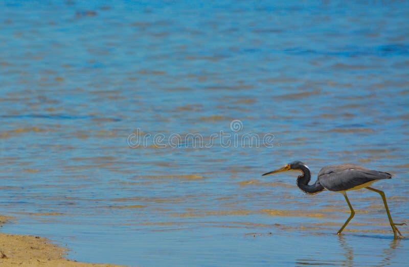 Een Vogel bij de Aquatische Reserve van de Citroenbaai in Cedar Point Environmental Park, Sarasota-Provincie Florida stock fotografie