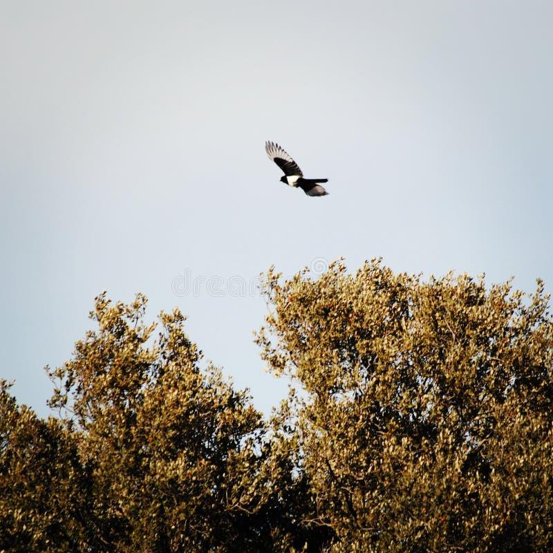 Een vogel die in de ochtend vliegen royalty-vrije stock foto