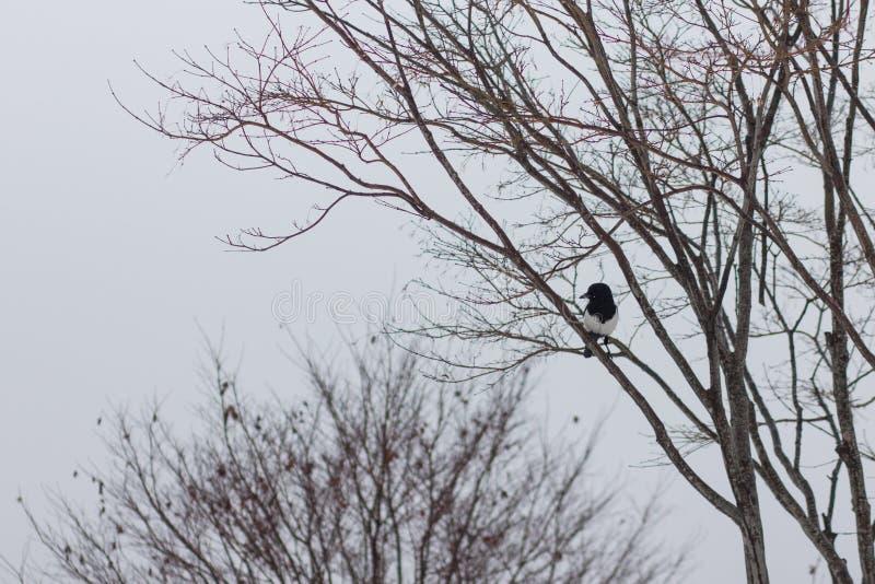 Een vogel die op een tak van een vernietigde boom rusten royalty-vrije stock afbeeldingen