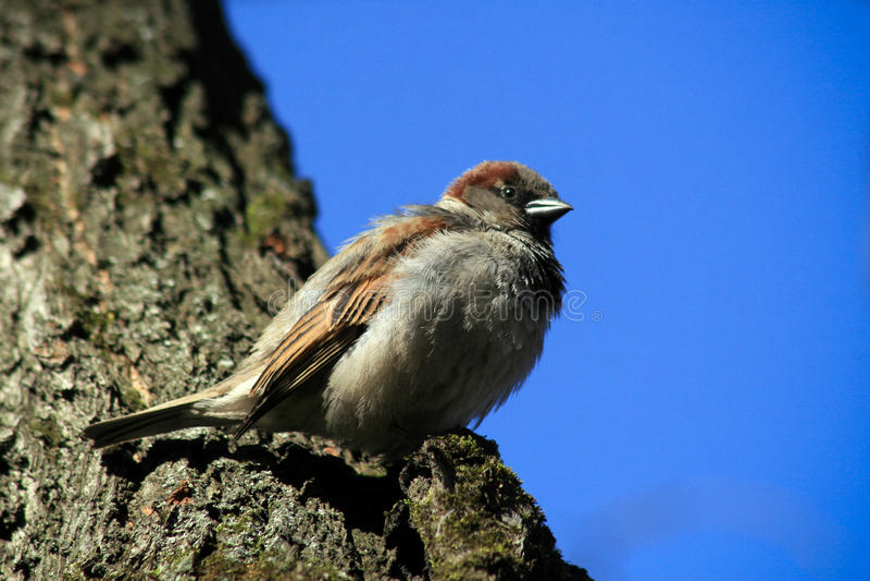 Een vogel een Mus stock fotografie