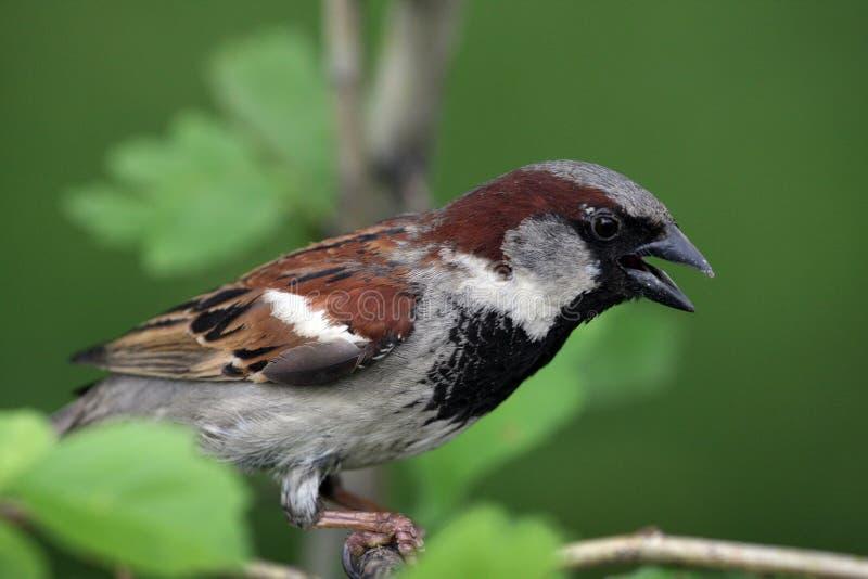 Een vogel een Mus stock foto's