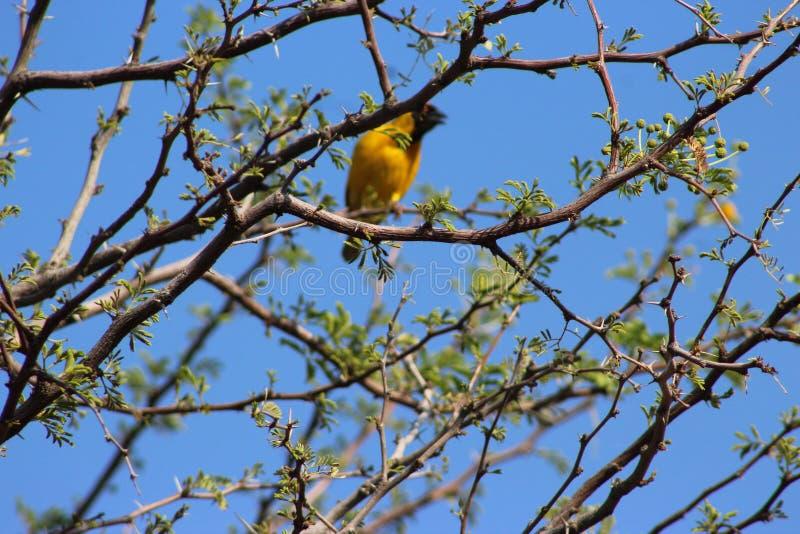 Een vogel in Namibië wordt gevangen dat stock afbeeldingen