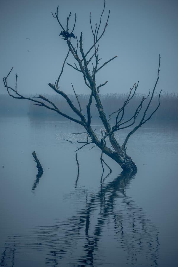 Een vogel rust op een boom in zagorohoria Griekenland royalty-vrije stock afbeeldingen