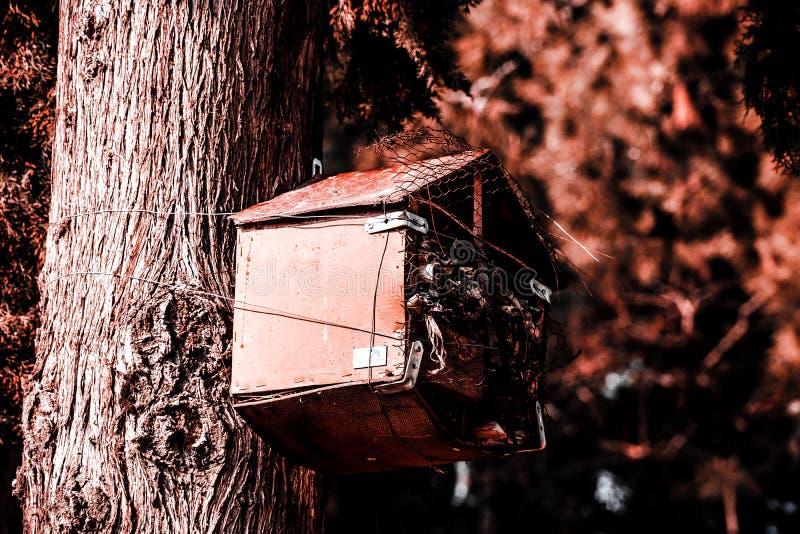 Een vogelhuis dat door mensen in de boom, een plaats voor vogels wordt geconstrueerd om geboorte in het bos te geven stock afbeeldingen