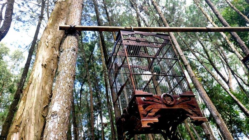 Een vogelkooi van hout wordt gemaakt dat stock afbeeldingen