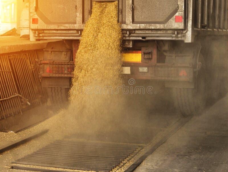Een vrachtwagen maakt korrel bij een van de korrelopslag en verwerking installatie, een faciliteit van de korrelopslag, landende  stock afbeeldingen