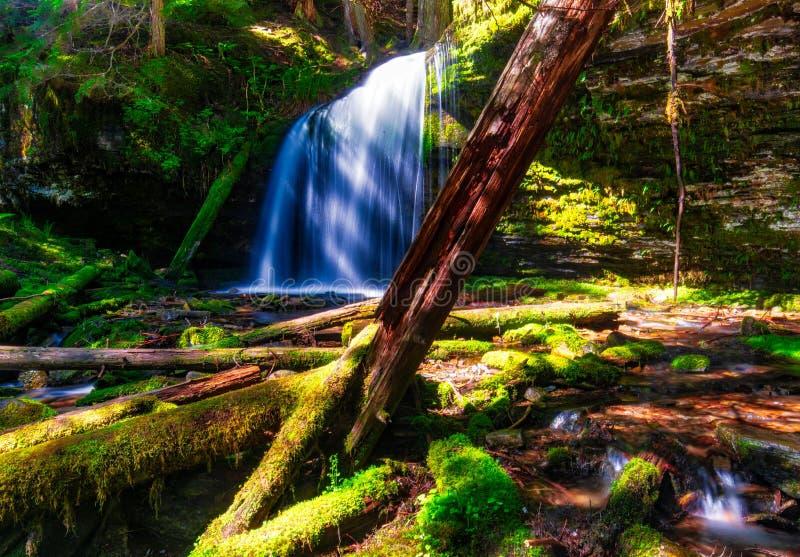 Een vreedzaam ogenblik in Fern Falls in Noordelijk Idaho stock foto