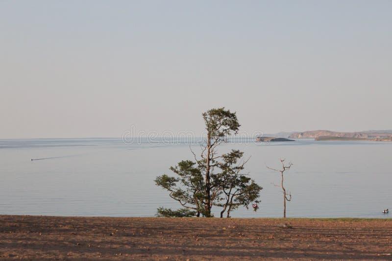 Een vreemde boom groeit door het overzees stock foto