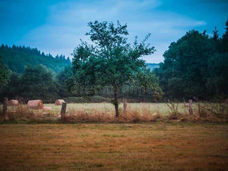 Een vroege ochtend in Eifel, die voor wat mist hopen stock foto's
