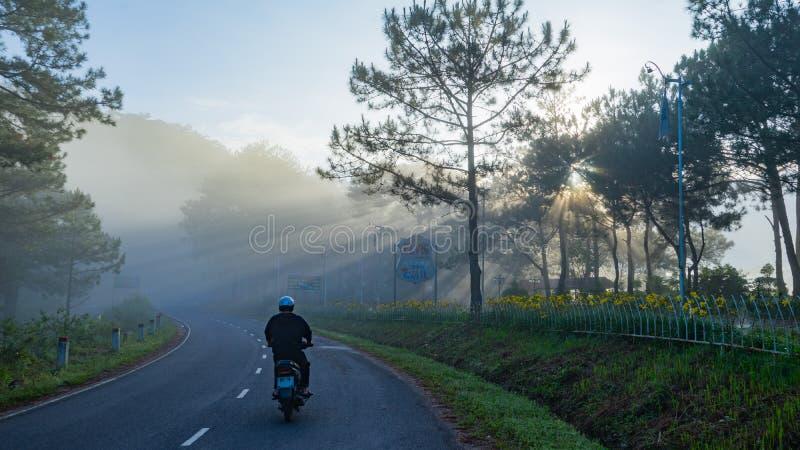 Een vroege ochtend in het meest pineforest in Dalat, Vietnam royalty-vrije stock fotografie