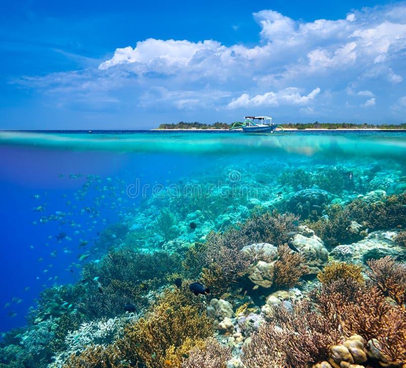 Een vrouw die dichtbij het mooie koraalrif met veel FI snorkelen stock afbeelding