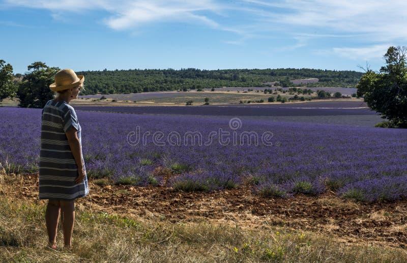 Een vrouw die een Lavendelgebied bekijken royalty-vrije stock afbeelding