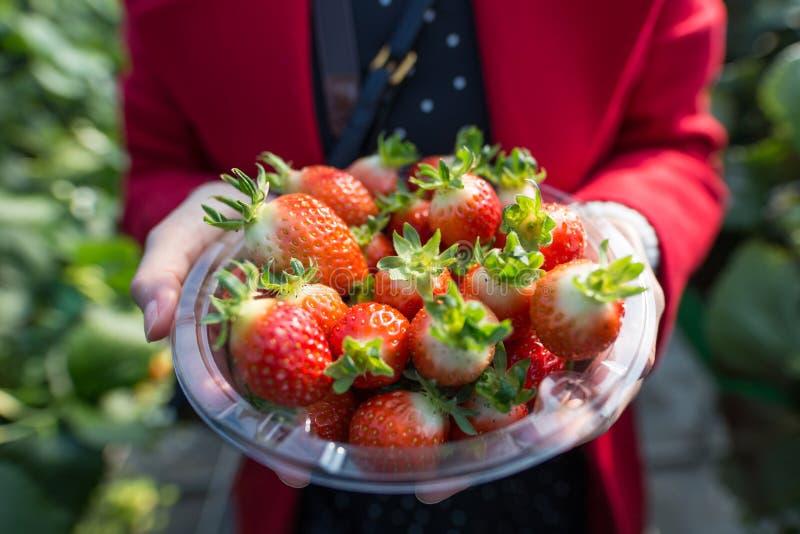 Een vrouw die een plastic die container tonen met aardbeien wordt gevuld royalty-vrije stock afbeeldingen