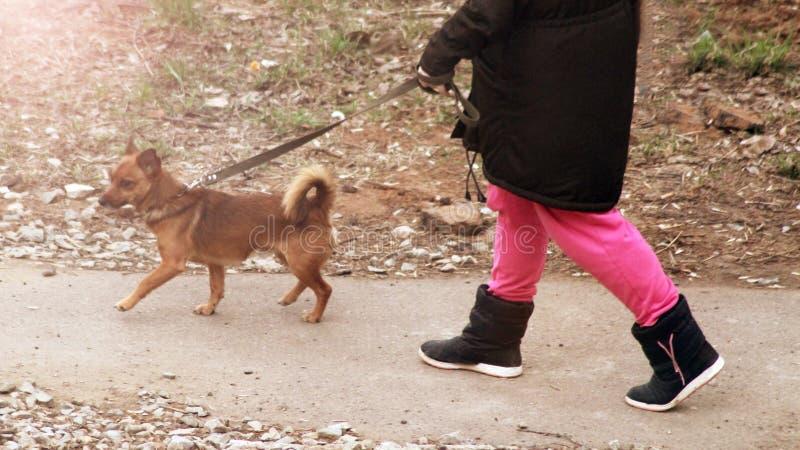 Een vrouw en een hond op een gang, openlucht royalty-vrije stock foto