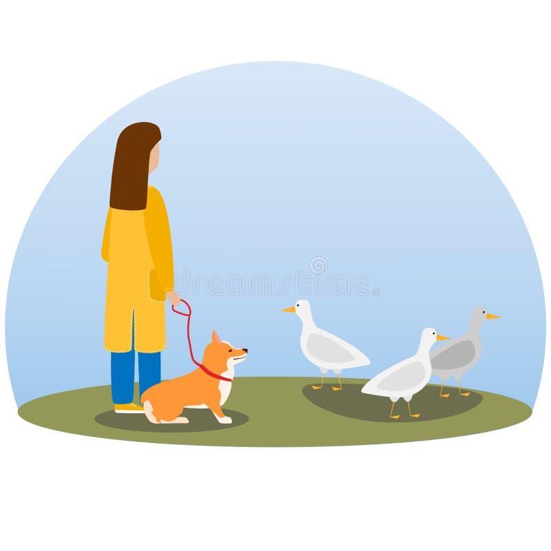 Een vrouw het lopen hond Gelukkige leuke hond Welse Corgi stock illustratie