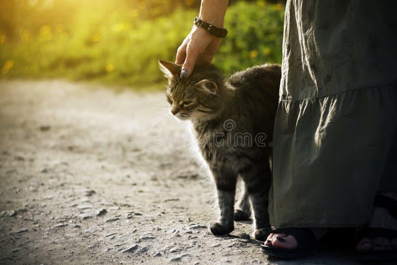 Een vrouw in een lange kleding die een gestreept verdwaald katje strijken stock afbeeldingen