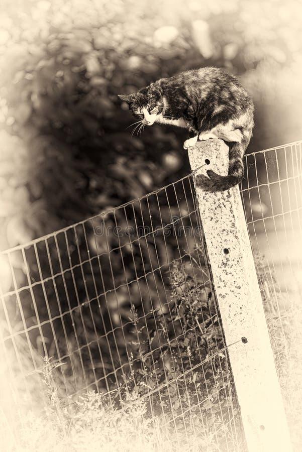 Een vrouwelijke kat streek op het concrete post asleeping neer Gestemd Sepia royalty-vrije stock foto