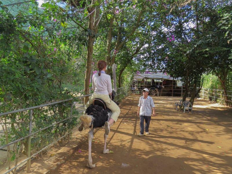 Een vrouwelijke toerist berijdt een struisvogel in Prenn-Park royalty-vrije stock fotografie