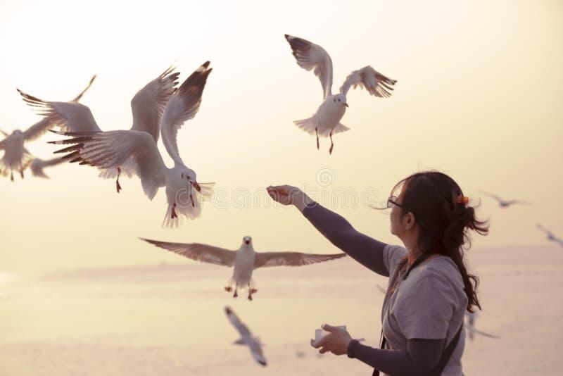 Een vrouwen voedende zeemeeuwen door haar handen stock afbeelding