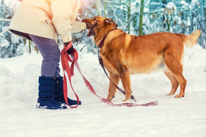 Een vrouwenhuisdieren de hond in de winter stock foto