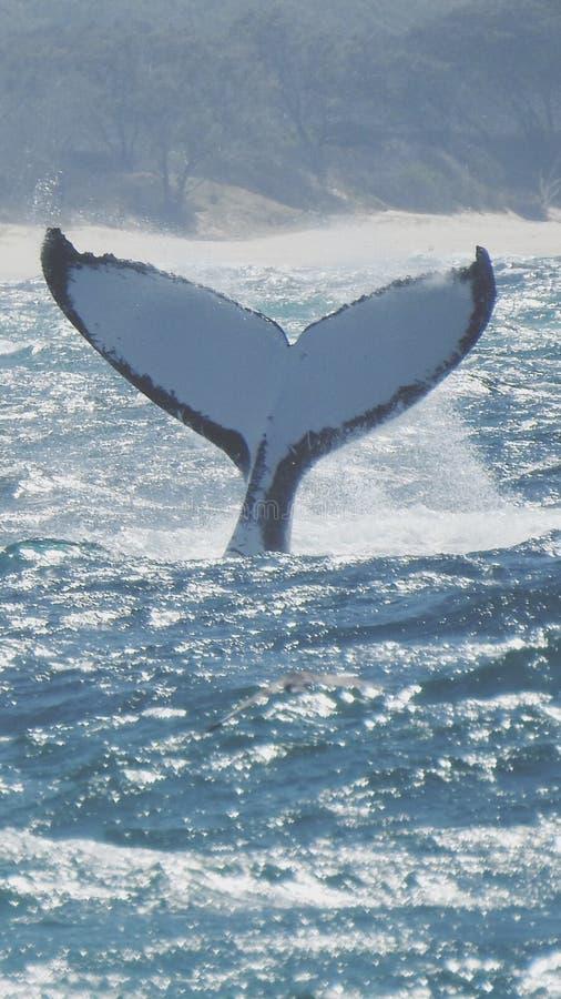 Een walvis van een verhaal royalty-vrije stock afbeeldingen