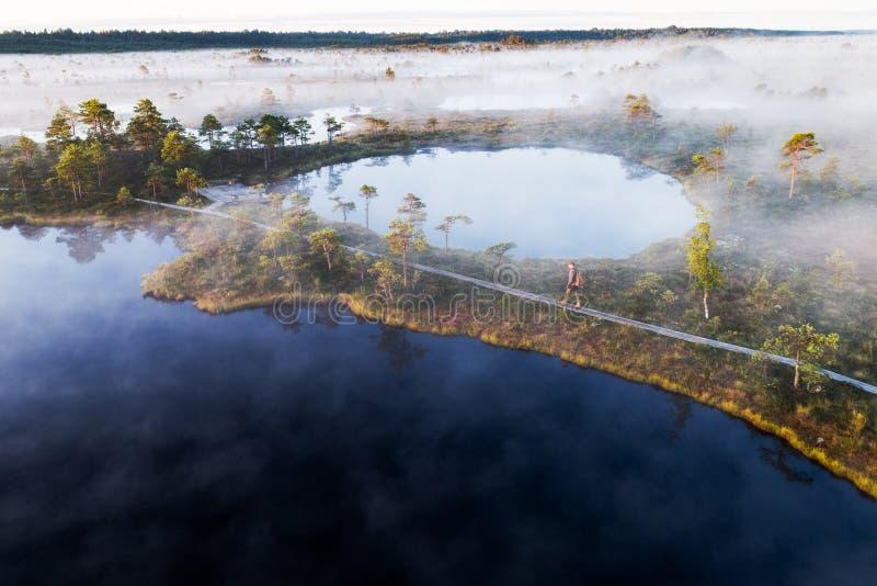 Een wandelaar op een moerassleep in het Nationale Park van Soomaa royalty-vrije stock fotografie