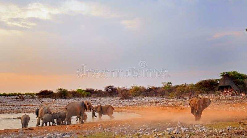 Een waterhole die bij schemer in Etosha met olifanten bestrooien stock fotografie
