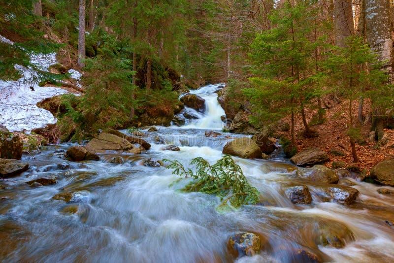 Een waterval in het bos stock foto