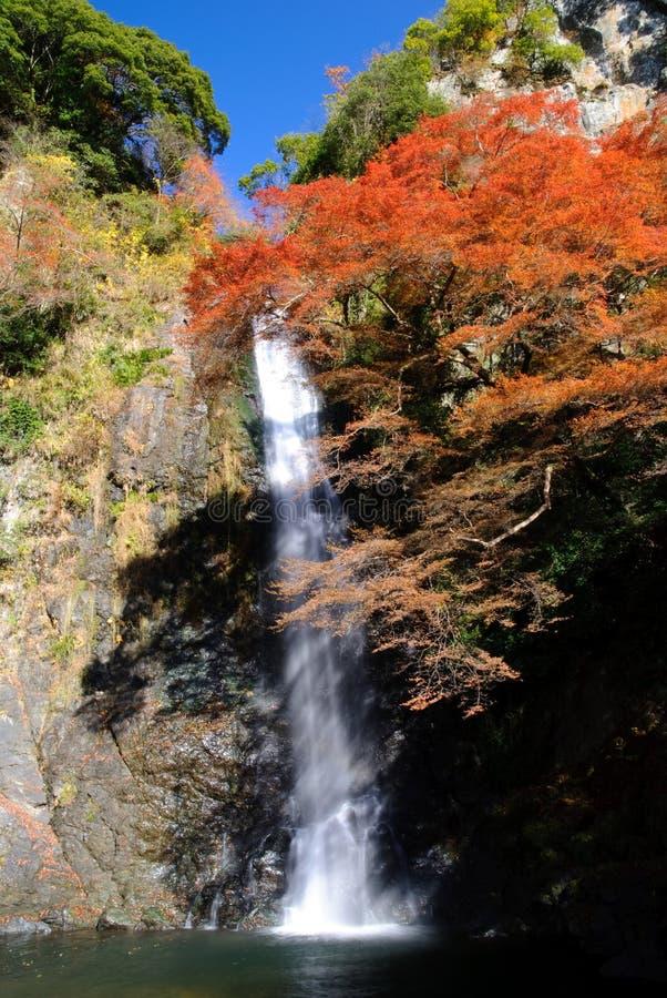 Een waterval met Japanse esdoorn. stock afbeelding