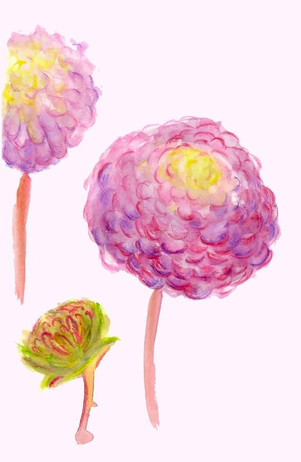 Een waterverf roze dahlia's stock illustratie