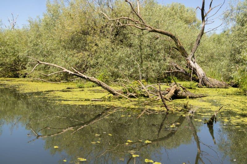 Een Weergeven van de Delta van Donau stock afbeelding