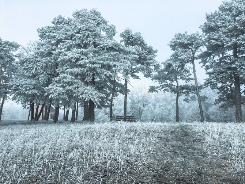 Een weg in een bevroren bos tijdens wintertijd royalty-vrije stock fotografie