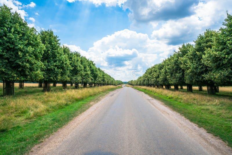 Een weg door Hampton Court Park royalty-vrije stock afbeeldingen