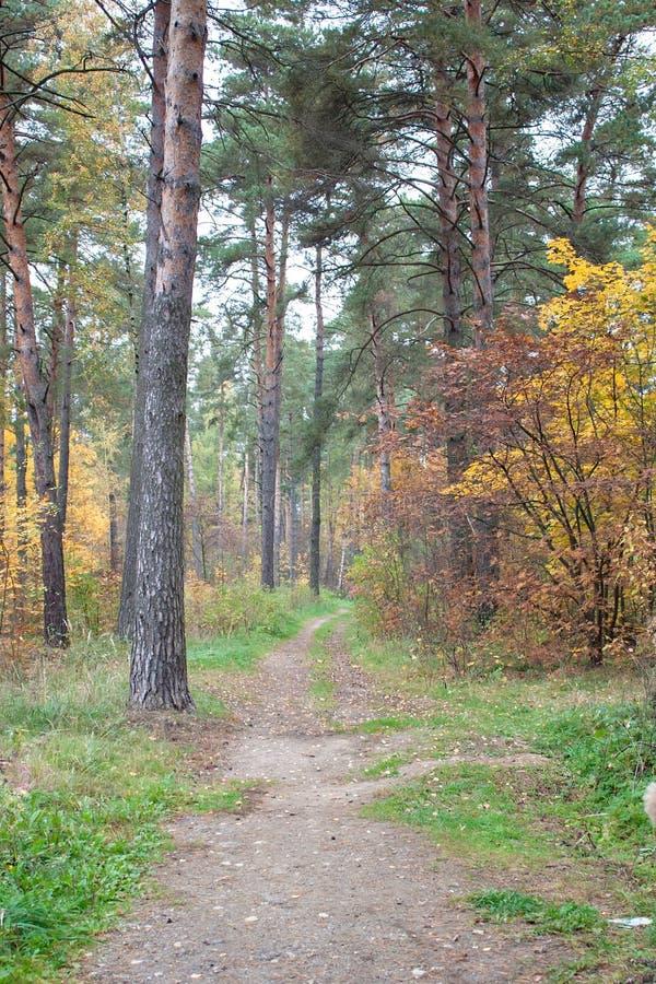 Een weg in het de herfstbos stock afbeeldingen